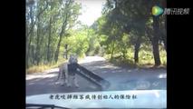 Siberian tiger eats a VW Jetta