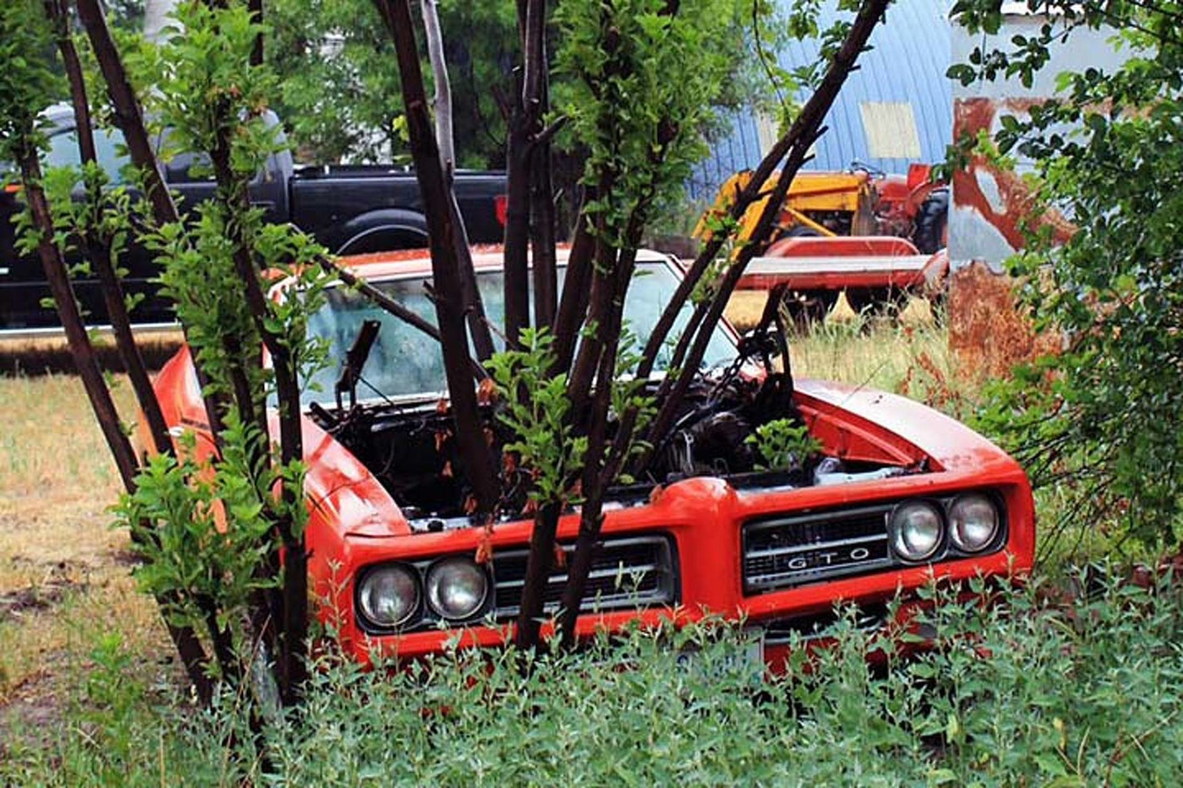 Pontiac GTO With a Tree Growing Out of It Gets a Second Chance
