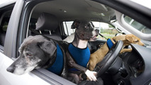 Volkswagen announces paw-wheel-drive program, teaches rescue dogs to drive