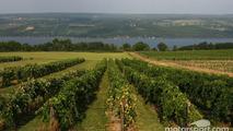 One of the many wineyards on Seneca Lake in the Watkins Glen area