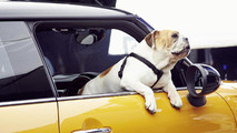 English bulldog stars in new MINI commercial - model teased again