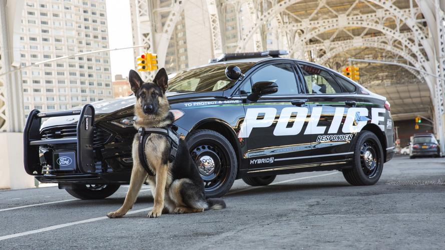 A világon elsőként állít forgalomba hibrid rendőrségi elfogót a Ford