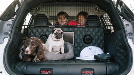 Animais no carro: você sabe transportar seu pet corretamente?