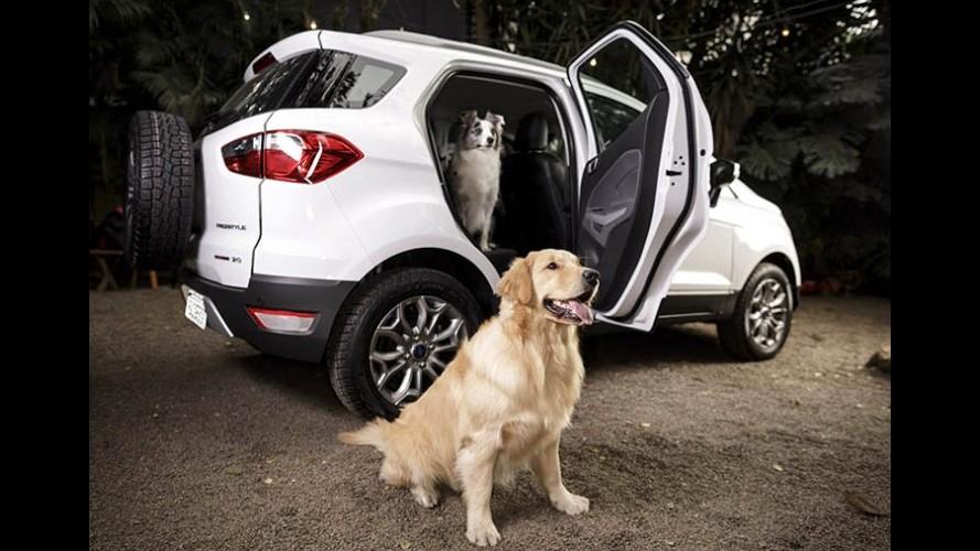 Dicas: como transportar os cachorros com segurança no carro