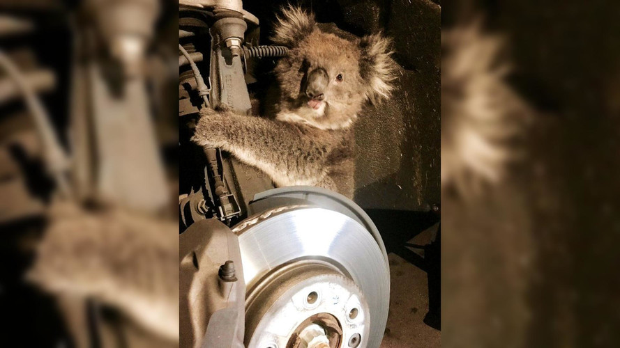 Koala Takes A 10-Mile Journey Clinging To Strut Assembly