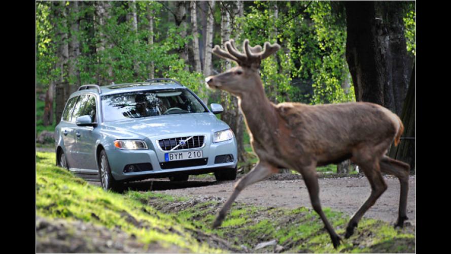 Volvo entwickelt Assistenzsystem gegen Wildunfälle