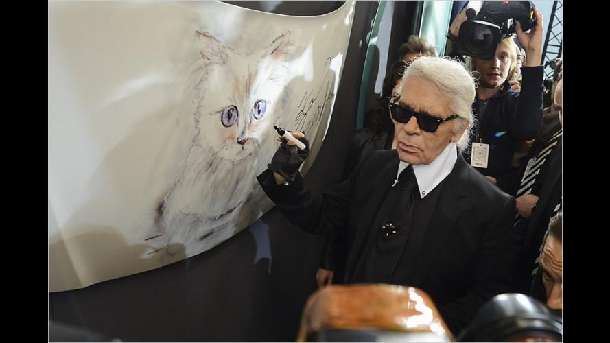 Künstlers Katze im Corsa