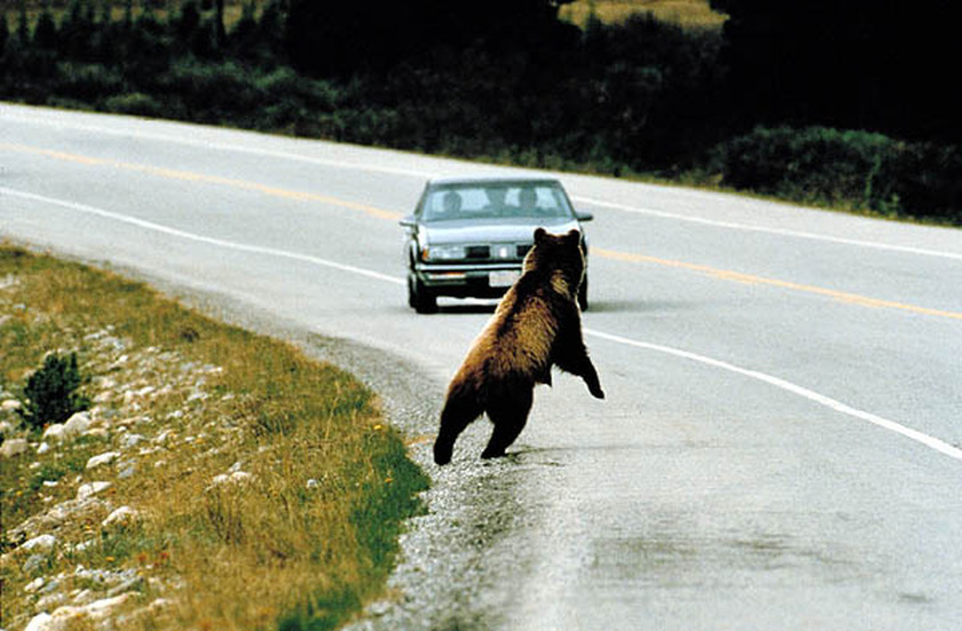 Roadkill for Dinner: Michigan Bill Would Make it Legal to Eat Dead Roadside Animals